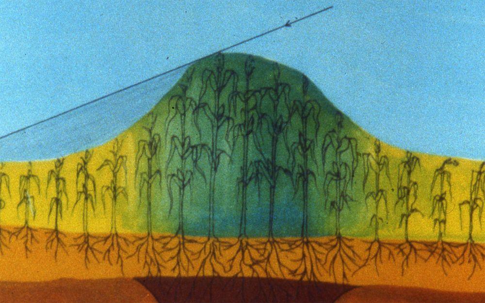 Croissance différentielle de végétaux en présence de structures en creux remblayées dans le sous-sol. Dessin  J.-C. Meuret