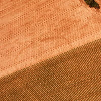 St-Guen (22). Kermain. Indices hydrographiques sur sols nus révélant un enclos de forme ovale. Cliché Maurice Gautier