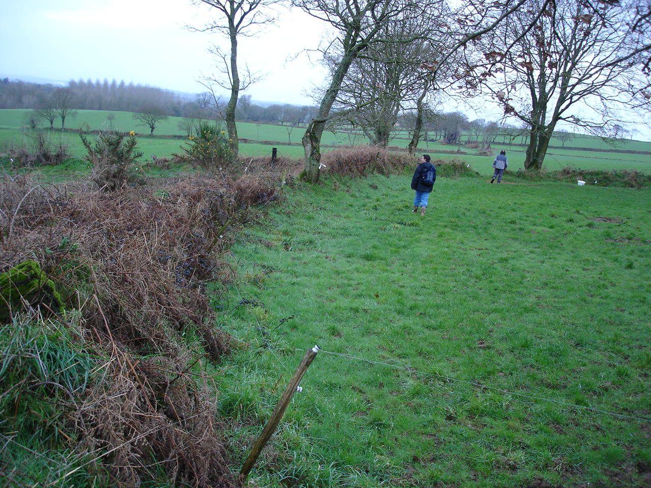 Prospection pédestre à Corlay sur l'enceinte de Kerguiel très arasée. Cliché A. Provost